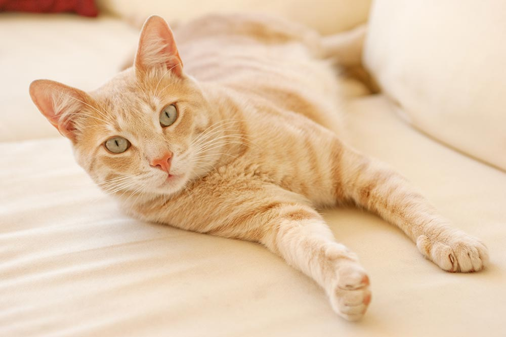 Floral Park NY Area Veterinarians in West Long Island: Pet